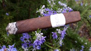 Blind Cigar Review: Iconic Leaf | Recluse OTG Toro